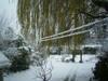 Snow_back_1